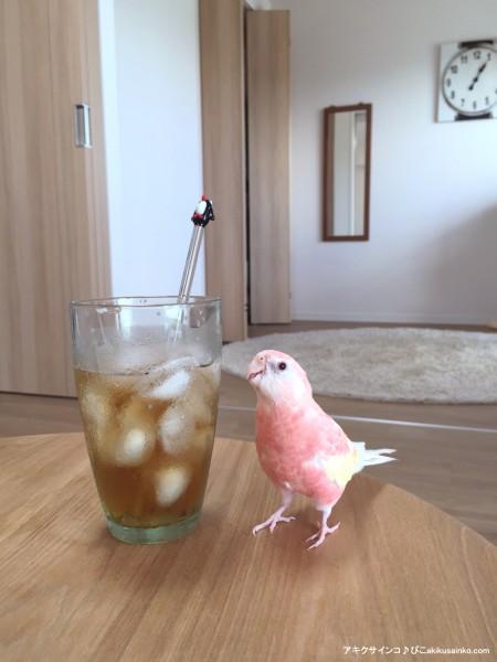 麦茶とぴこ