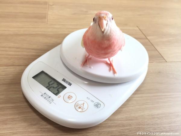 ぴこ体重計