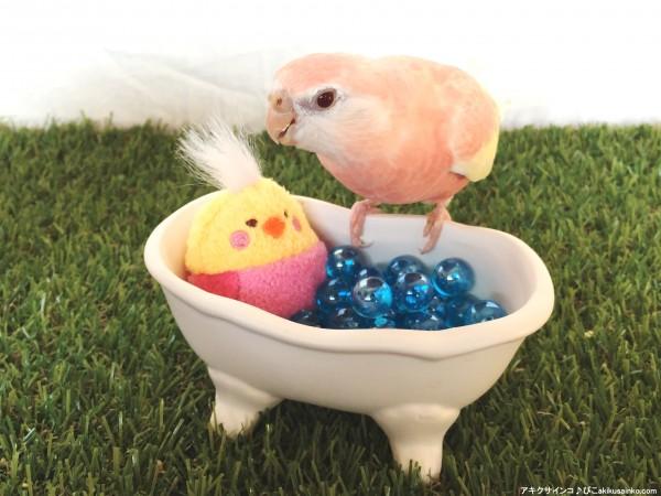 ぴこ、お風呂入りたい