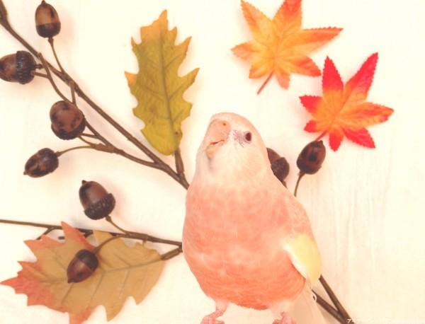 ぴこ秋を感じる