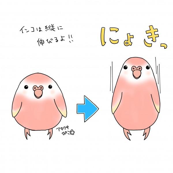 にょきぴこ