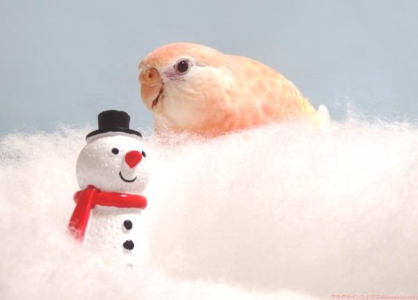 雪と雪だるま